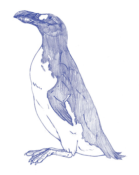 Great Auk-blue