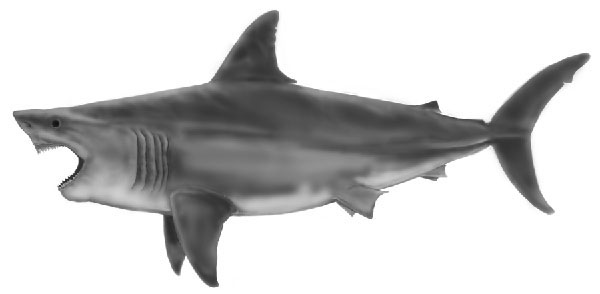 new megalodon copy