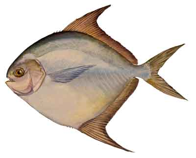 012-Harvestfish copy