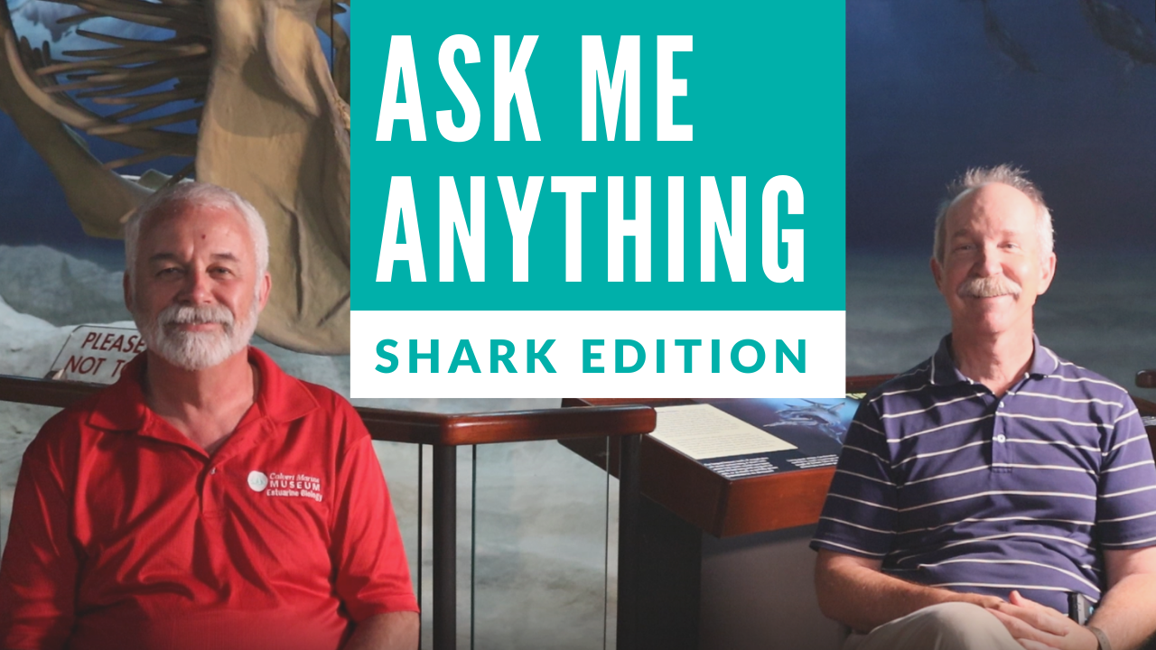 Ask Me Anything - Sharkfest Edition Opens in new window